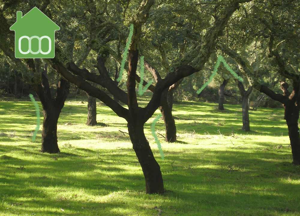 Próximos-Lanzamientos-de-Pisos-en-Guadalix-de-la-Sierra