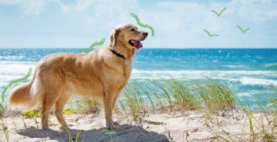 playas españolas donde admiten perros