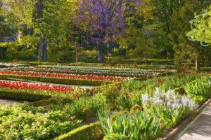 lacooop-jardin-botanico-de-cobeña-especies