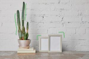 cuidado-de-plantas-cactus